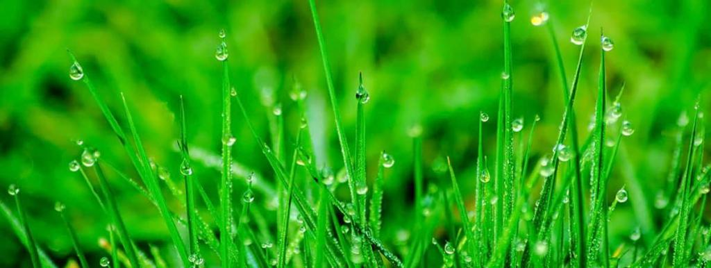 lawn paradise آبیاری تحت فشار